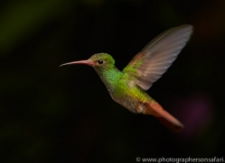 Hummingbird 2015-34copyright-photographers-on-safari-com