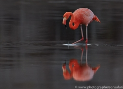 Flamingo 2015 -11copyright-photographers-on-safari-com