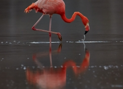Flamingo 2015 -12copyright-photographers-on-safari-com