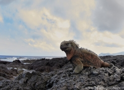 Iguana 2015 -4copyright-photographers-on-safari-com