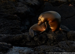 Sealion 2015 -6copyright-photographers-on-safari-com