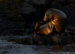Sealion 2015 -7copyright-photographers-on-safari-com