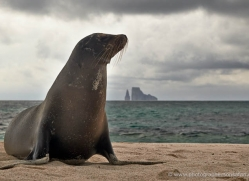 sealion-1856-galapagos-copyright-photographers-on-safari-com