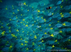 snorkelling-1716-galapagos-copyright-photographers-on-safari-com