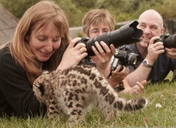 snow-leopard-cub3058-hertfordshire-copyright-photographers-on-safari-com