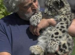 snow-leopard-cub3064-hertfordshire-copyright-photographers-on-safari-com
