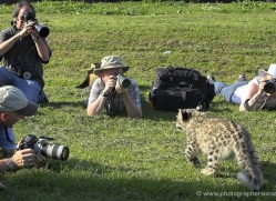 snow-leopard-cub3070-hertfordshire-copyright-photographers-on-safari-com