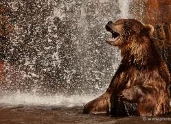 brown-bear-moab-2098-copyright-photographers-on-safari-com-1