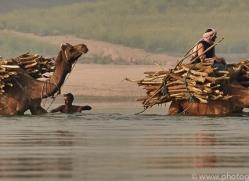 indian-camel-copyright-photographers-on-safari-com-7348