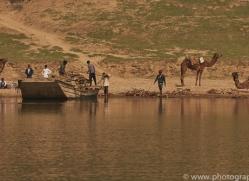 indian-camel-copyright-photographers-on-safari-com-7356