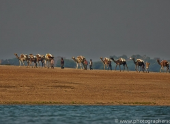 Camel Train 2015 -1copyright-photographers-on-safari-com
