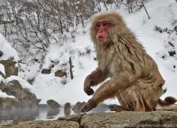 snow-monkey-japan5704copyright-photographers-on-safari-com