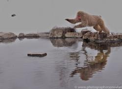 snow-monkey-japan5738copyright-photographers-on-safari-com