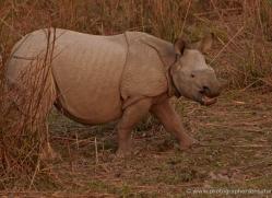 asian-one-horned-rhino-3907-india-copyright-photographers-on-safari-com