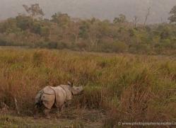 asian-one-horned-rhino-3909-india-copyright-photographers-on-safari-com