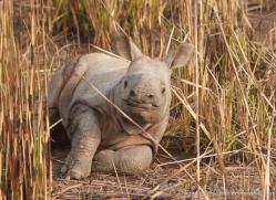 asian-one-horned-rhino-3929-india-copyright-photographers-on-safari-com