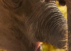 indian-elephant-3861-india-copyright-photographers-on-safari-com