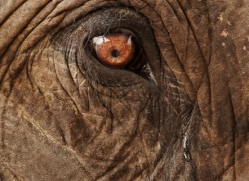 indian-elephant-3862-india-copyright-photographers-on-safari-com