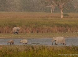 indian-elephants-3900-india-copyright-photographers-on-safari-com