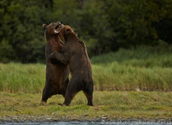 Brown Bear 2014-19copyright-photographers-on-safari-com