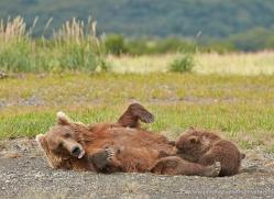 brown-bear-alaska-1317-copyright-photographers-on-safari-com