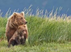 brown-bear-alaska-1329-copyright-photographers-on-safari-com