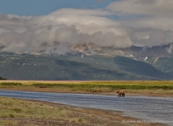 brown-bear-alaska-1346-copyright-photographers-on-safari-com