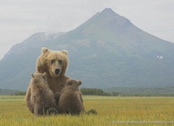 brown-bear-alaska-1350-copyright-photographers-on-safari-com
