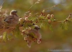 weaver-2750-copyright-photographers-on-safari-com