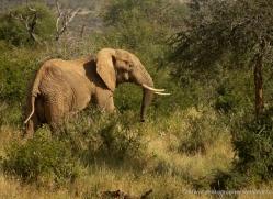 elephant-2743-copyright-photographers-on-safari-com