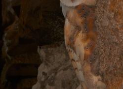 Barn-Owl-copyright-photographers-on-safari-com-6006