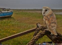 Barn-Owl-copyright-photographers-on-safari-com-6013