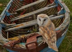 Barn-Owl-copyright-photographers-on-safari-com-6026