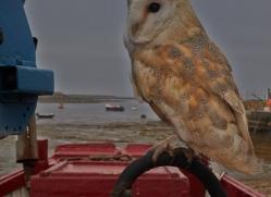 Barn-Owl-copyright-photographers-on-safari-com-6017