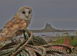 Barn-Owl-copyright-photographers-on-safari-com-6018