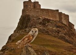 Barn-Owl-copyright-photographers-on-safari-com-6000