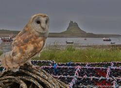 Barn-Owl-copyright-photographers-on-safari-com-6022