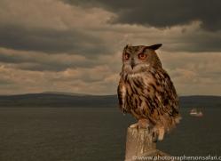 Eagle-Owl-copyright-photographers-on-safari-com-6038