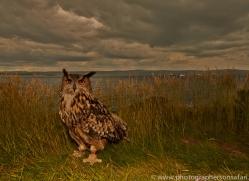 Eagle-Owl-copyright-photographers-on-safari-com-6040