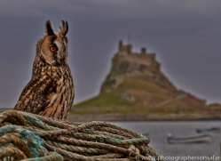 Long-Eared-Owl-copyright-photographers-on-safari-com-6053