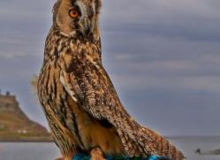 Long-Eared-Owl-copyright-photographers-on-safari-com-6057