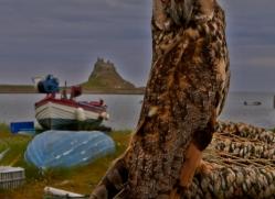 Long-Eared-Owl-copyright-photographers-on-safari-com-6059