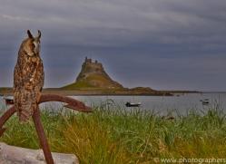 Long-Eared-Owl-copyright-photographers-on-safari-com-6061
