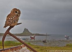 Tawny-Owl-copyright-photographers-on-safari-com-6092