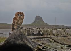 Tawny-Owl-copyright-photographers-on-safari-com-6096