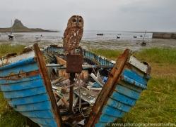 Tawny-Owl-copyright-photographers-on-safari-com-6103