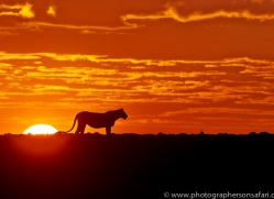 Sunrise 2014-2copyright-photographers-on-safari-com