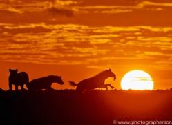 Sunrise 2014-3copyright-photographers-on-safari-com