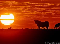 Sunrise 2014-4copyright-photographers-on-safari-com