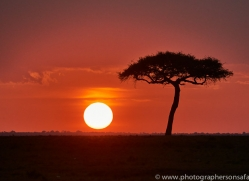 Sunset 2014-1copyright-photographers-on-safari-com